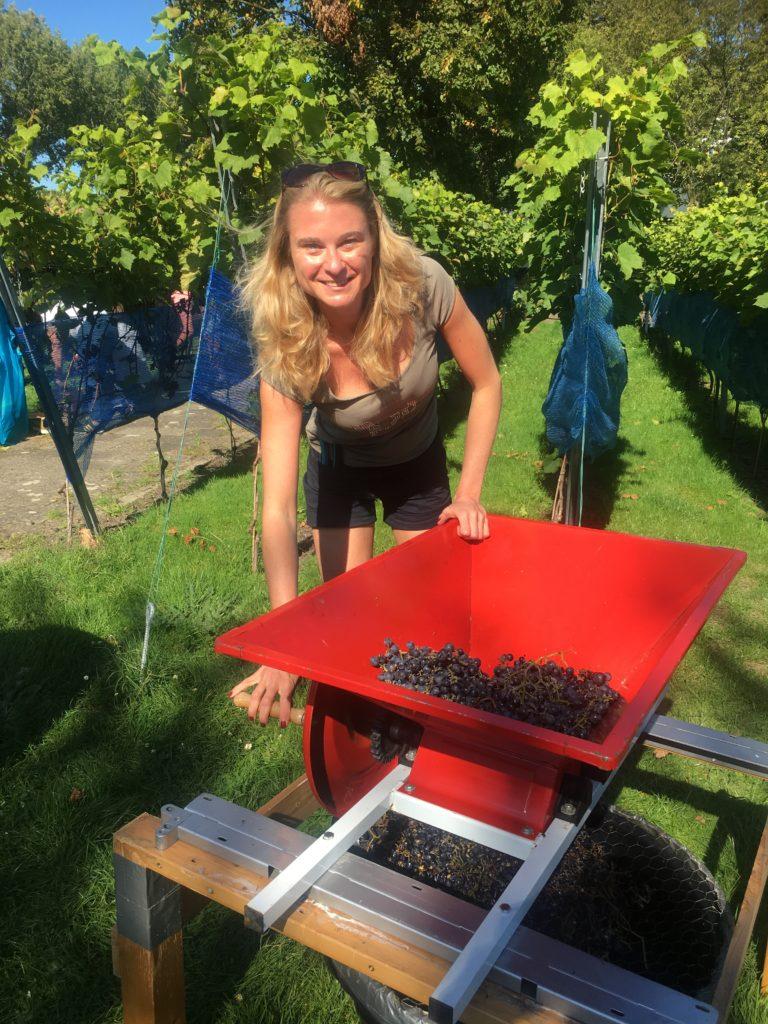 Marieke aan het werk in de wijngaard